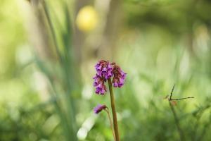 Flower, medium close-up by Benjamin Engler