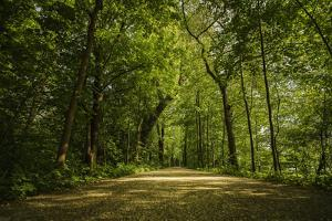Forest way, play of light and shadow by Benjamin Engler