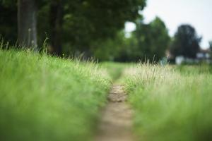 small path through a meadow by Benjamin Engler