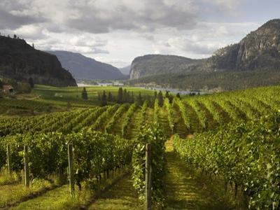 Landscape of Winery