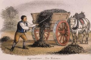 Agriculture, for Manure, C1845 by Benjamin Waterhouse Hawkins