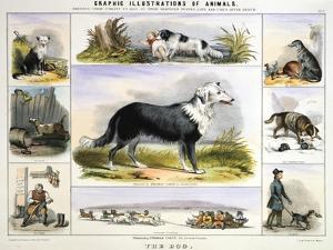 The Dog, C1850 by Benjamin Waterhouse Hawkins