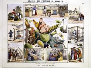 The Silk-Worm, C1850 by Benjamin Waterhouse Hawkins