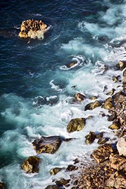 A Sea Lion Colony of the Coast of Big Sur, California by Bennett Barthelemy