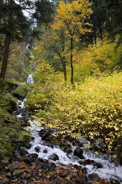 A View of Waukeena Falls in Oregon's Columbia River Gorge with Fall Colors by Bennett Barthelemy