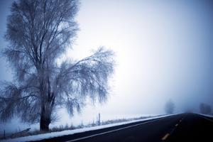 An Ice Encrusted Tree and Thick Fog in the Morning after a Snowstorm in North Central Oregon by Bennett Barthelemy