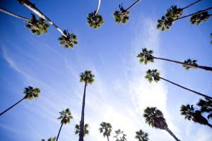 Palm Trees and Sky in Santa Barbara California by Bennett Barthelemy