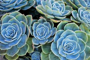 Succulents by Bennett Barthelemy