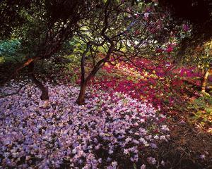 Falling Flowers by Bent Rej