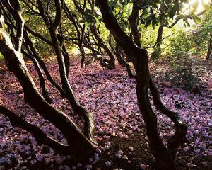Floral Descent by Bent Rej