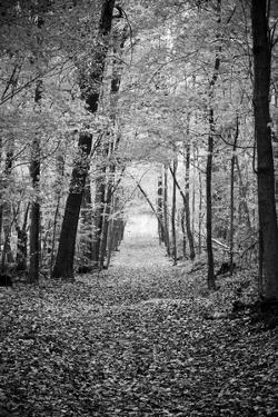 Berkshires Near Appalachian Trail Black and White