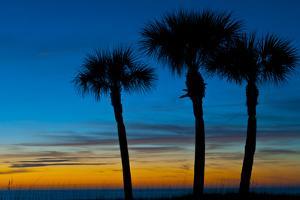 USA, Florida, Sarasota, Crescent Beach, Siesta Key. sunset and palm trees by Bernard Friel