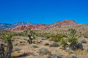 USA, Nevada. Las Vegas. Red Rock National Conservation Area, Calico Hills North by Bernard Friel