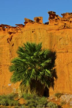 USA, Nevada, Mesquite. Gold Butte National Monument, Little Finland, Palm tree in the Desert by Bernard Friel
