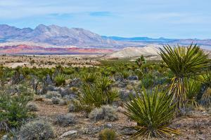USA, Nevada, Mesquite. Gold Butte National Monument, Million Hills from Gold Butte Road by Bernard Friel