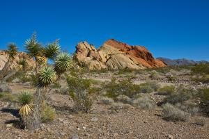 USA, Nevada, Mesquite. Gold Butte National Monument, Whitney Pocket by Bernard Friel
