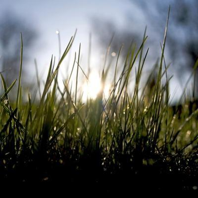 Blades Of Grass With Water Drops Against Sunlight