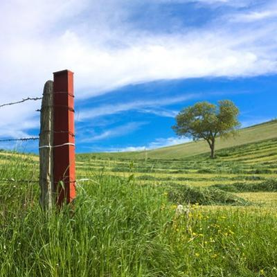 Fence and Tree in a Mowed Field, Limagne, Auvergne, France, Europe