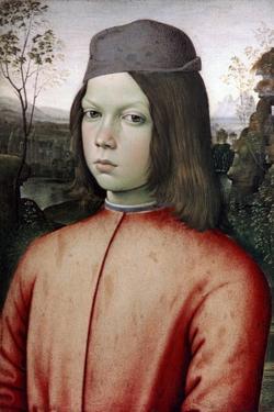 Portrait of a Boy, C1480-1485 by Bernardino Pinturicchio