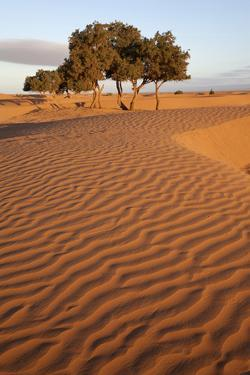 View of desert sand dunes with trees, Sahara, Morocco, may by Bernd Rohrschneider