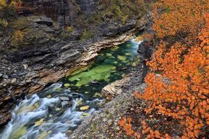 Europe, Sweden,  Abisko National Park, Autumn at the Abisko Canyon by Bernd Rommelt