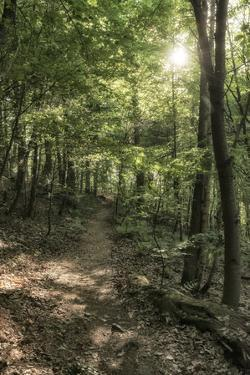 Klingenberg, Bavaria, Germany, Chestnut Path, Mixed Forest Near Klingenberg in Lower Franconia by Bernd Wittelsbach
