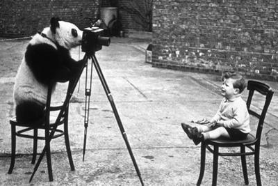Panda Photographer by Bert Hardy