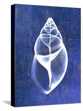 Achatina Shell (indigo) by Bert Myers
