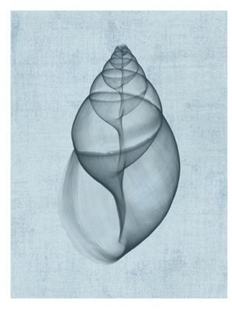 Achatina Shell (light blue)