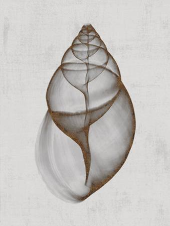 Achatina Shell by Bert Myers