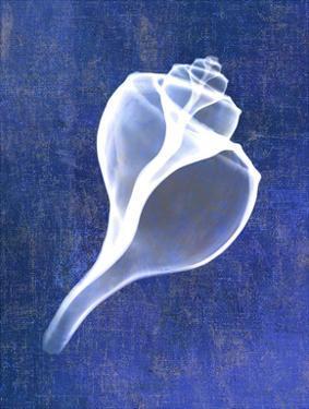 Channelled Whelk (indigo) by Bert Myers
