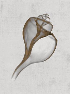 Channelled Whelk by Bert Myers