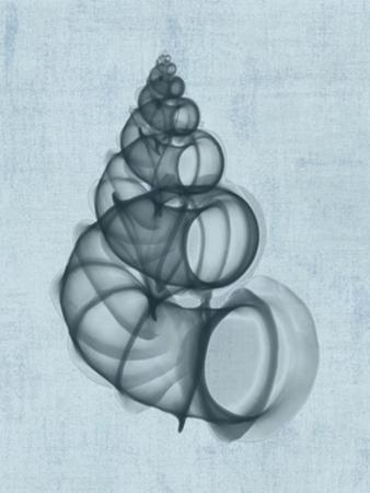 Wentletrap Shell (light blue)