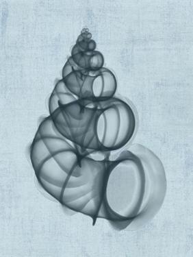 Wentletrap Shell (light blue) by Bert Myers