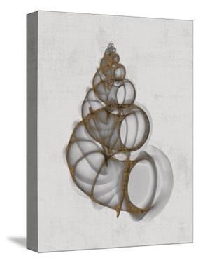 Wentletrap Shell by Bert Myers