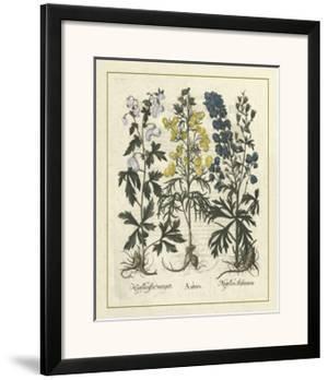 Besler Floral I by Besler Basilius