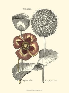 Tinted Floral II by Besler Basilius