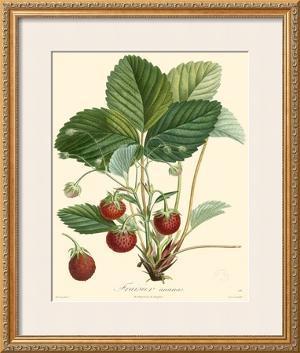 Strawberries by Bessa