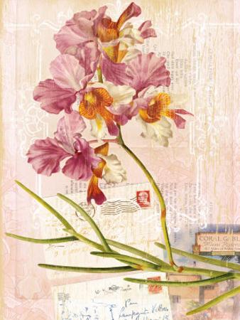 Vintage Botanica Flower Print