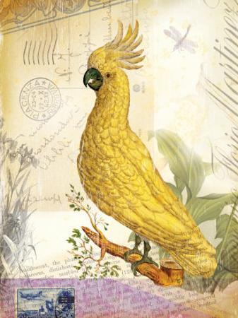 Vintage Botanical Cockatoo Print