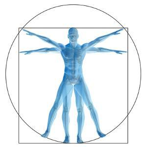 Vitruvian Human or Man, Anatomy Body for Biology by bestdesign36