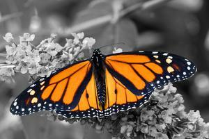Brilliant Butterfly by Beth B.