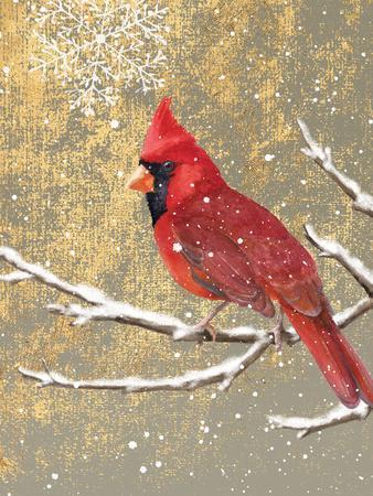 Winter Birds Cardinal Color