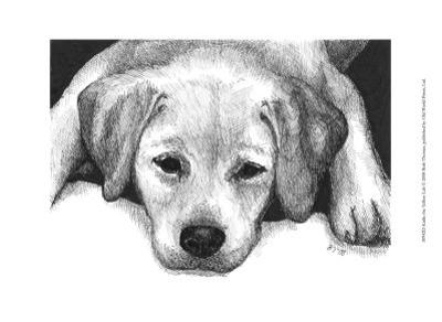 Kailie the Yellow Lab
