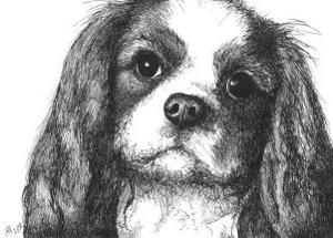 Louie the Cavalier King Charles by Beth Thomas