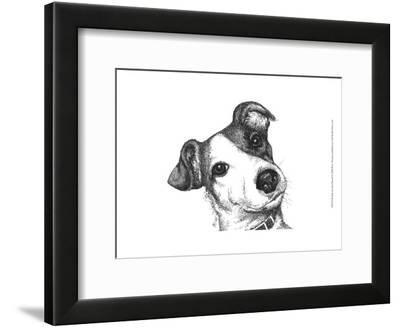 Robbie the Jack Russell