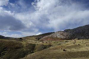 Alpaca Graze Below Rocky Outcrops of the Altiplano Between Cambria and Putina by Beth Wald