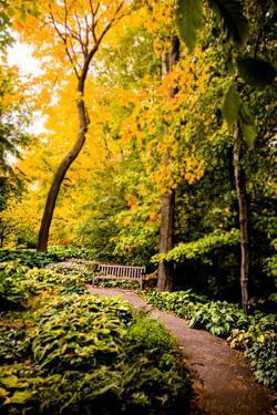 Autumn Pathway II by Beth Wold