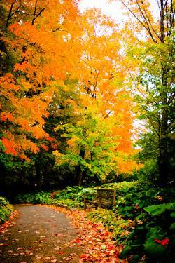 Autumn Pathway III by Beth Wold