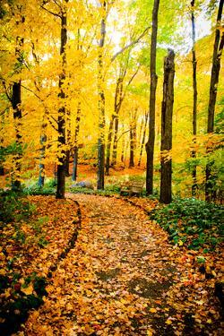 Autumn Pathway IV by Beth Wold